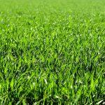 Když se řekne pozemek – kupní smlouvu na pozemek si pořádně ohlídejte